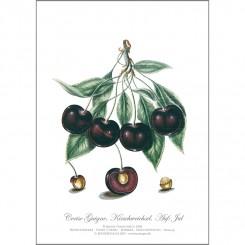 KUNSTTRYK A4 – Kirsebær