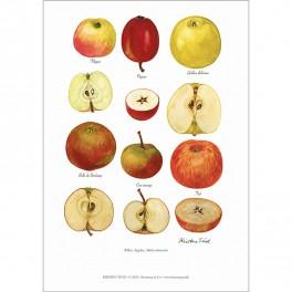 KUNSTTRYK A4 – Æblesorter