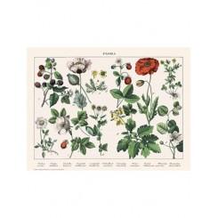 Naturplakat - Flora - Hunderose