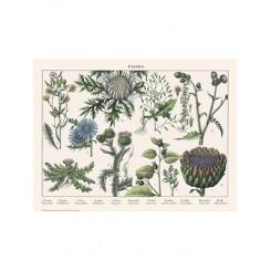 Naturplakat - Flora - Skovsalat