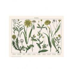 Naturplakat - Flora - Skorzonerod