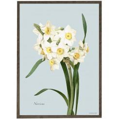 KUNSTTRYK A3 – Narcissus