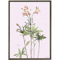 KUNSTTRYK A4 – Lily