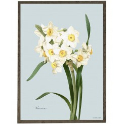 KUNSTTRYK A4 – Narcissus