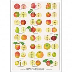 Koustrup miniplakat A4 – Smagfulde æbler