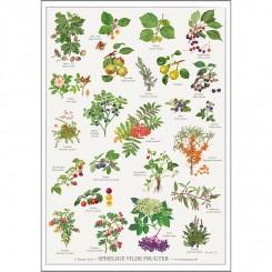 Koustrup miniplakat A4 – Spiselige vilde frugter