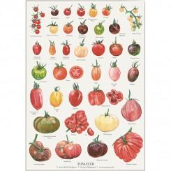 Koustrup miniplakat A4 – Tomat