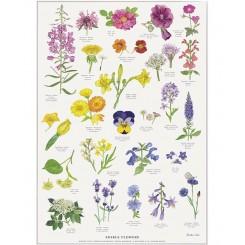 Koustrup miniplakat A4 – Edible Flowers