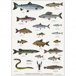 Koustrup miniplakat A4 - Ferskvandsfisk og flodkrebs