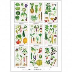 Koustrup miniplakat A4 - Økologisk have