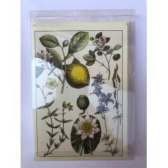 Blomster - 8 dobbeltkort m. creme kuvert