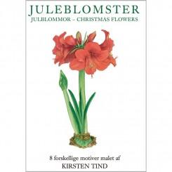 JULEBLOMSTER - 8 forskellige dobbeltkort