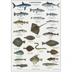 "Plakat ""HAVETS FISK"""