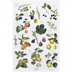 Økologisk viskestykke - Frugt