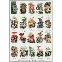 Koustrup miniplakat A4 - Spiselige svampe