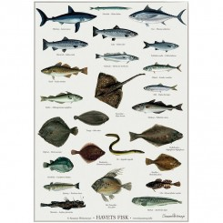 Koustrup miniplakat A4 - Havets fisk