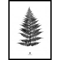 Malerifabrikken plakat 30 x 40 cm, Black Fern