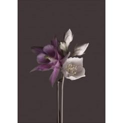 Malerifabrikken plakat 40 x 50 cm, Flower Brown