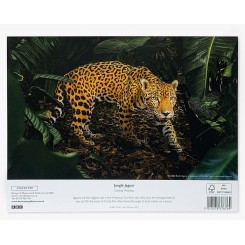 Brevpapir, Jungle Jaguar