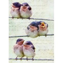 Notesbog A5, linieret, fugle