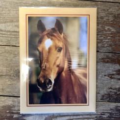 Brevpapir, hest