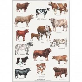 Koustrup miniplakat A4 – kvægracer